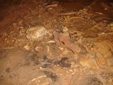 Sur les traces de l'ours des cavernes en Ardèche