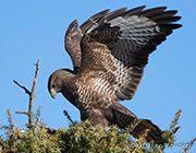 A la rencontre de la faune sauvage du sud Ardèche