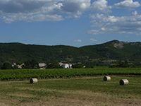 L'agriculture ardéchoise, garante d'une alimentation diversifiée et de qualité.