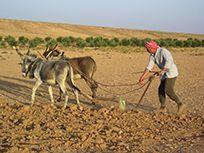 La domestication végétale ou les débuts de l'agriculture.
