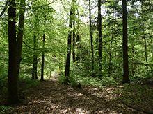 Forêt des monts d'Ardèche : la Gravenne de Montpezat.