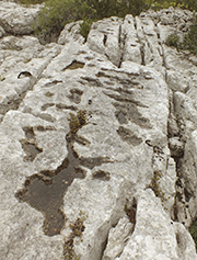 Les «gras» d'Ardèche,un paysage entre manque et excès d'eau
